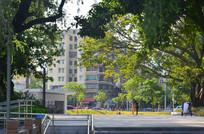 公园绿树风景