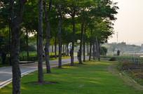 花草树木小路风景