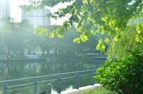 湖边绿树风景