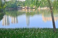 美丽的公园湖泊风景