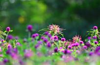 美丽的花草风景