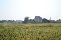 收割后的稻田田园风景