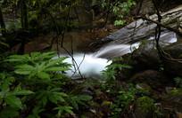 瓦屋山的溪流和绿色植物