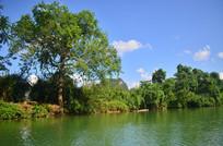 小河绿树风景