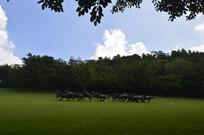 草地群马奔腾青铜雕塑