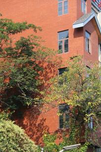 橘紅色房子外的樹木