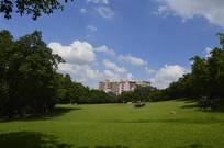 建筑树木大草坪风景
