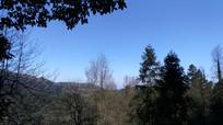 蓝天下的原始森林