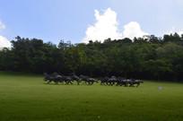 绿色草坪群马奔腾青铜雕塑