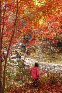 漂亮的红叶及游客