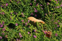 野花丛中的一片枯叶
