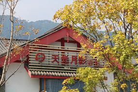 中式建筑屋顶前的枫叶