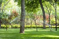 公园里绿油油的草地和喷水龙头