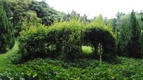 公园绿树花草风景