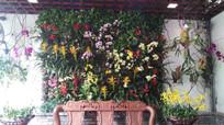 花卉花艺背景墙