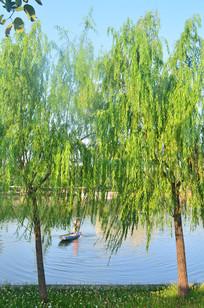 湖边的柳树小船风光