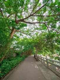 惠州西湖风景区黄塘附近小路
