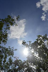 蓝天白云阳光绿树风景