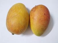 芒果水果食物