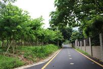 美丽林荫绿道