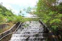小溪流水的树林