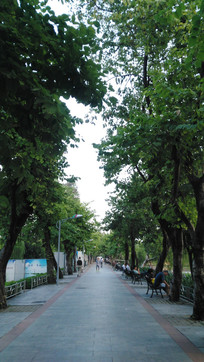 公园小路树木风景