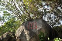 海南树木怪石