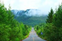 绿色的林海山路