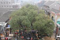 绿树下的回民街