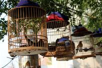 鸟笼挂在树上遛鸟