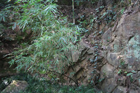 石壁上的竹叶