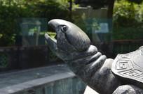 乌龟的头部雕塑特写