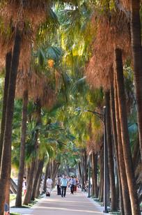 公园扇树小路风景