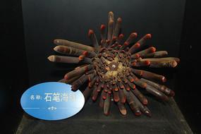 海底生物石笔海胆展览