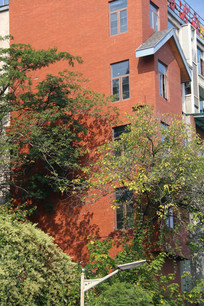 橘红色房子前茂密的树叶