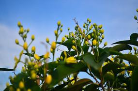 黄色小花风景