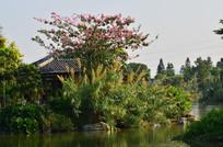绿岛古建筑花草风景