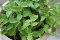 绿色植物背景