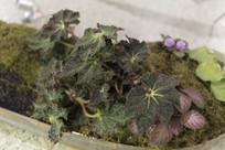 茂盛的阴生植物