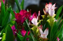 美丽的绿叶红花花草