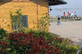 木屋旁的绿色与红色灌木