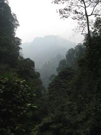 青翠的密林与大山