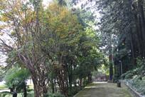 秋日的公园小路