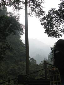 山峰中央的一棵树