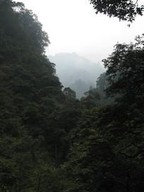山峦与原始森林