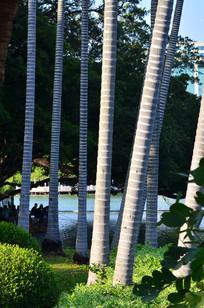 树木树干风景