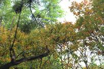 阳光照射下发黄的树叶