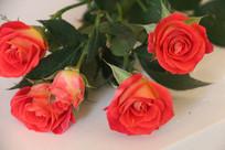 绽放的四朵玫瑰
