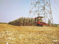 北方的秋天-收割玉米