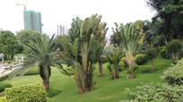 草地芭蕉树风景